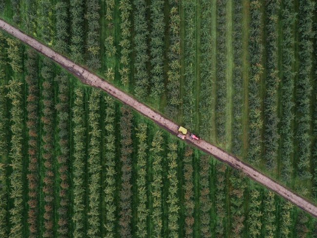 A crop field with tractors driving through it on a dirt road